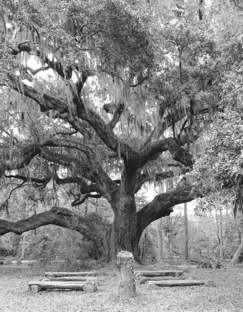 244-marriage-tree